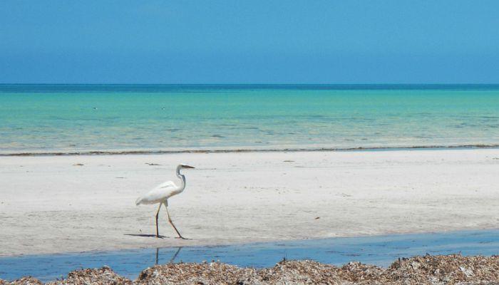 Qué hacer en Holbox, Quintana Roo