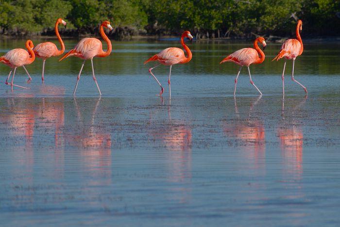 Reservas naturales de México: ¿qué hacer y cómo llegar?