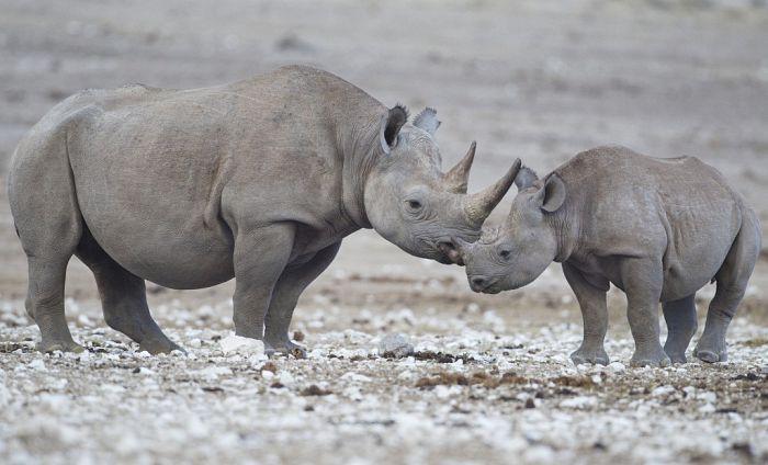 Los mejores safaris en África: vida salvaje cerca de ti