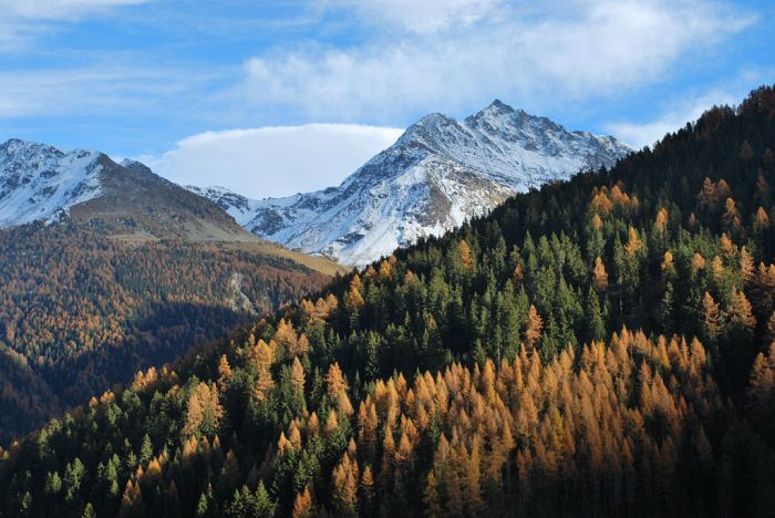 Vacaciones en los Alpes Suizos, un viaje de horizontes campestres