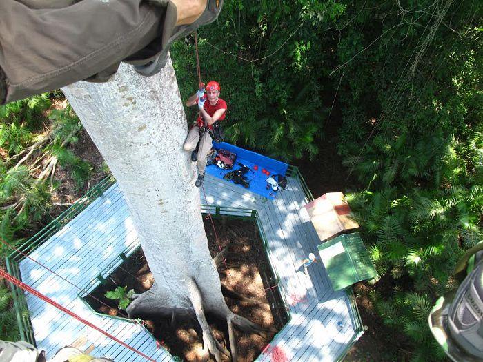 La experiencia de trepar un árbol gigante en un tour en el Amazonas es única.