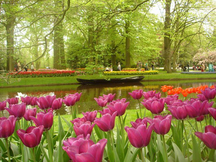 Vuelos baratos al mundo de las flores