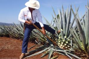 Encuentra vuelos baratos a Guadalajara y viaja al sabor de México