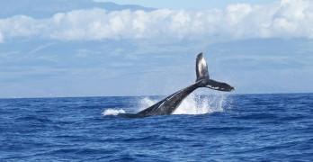 Avistamiento de ballenas en Vancouver