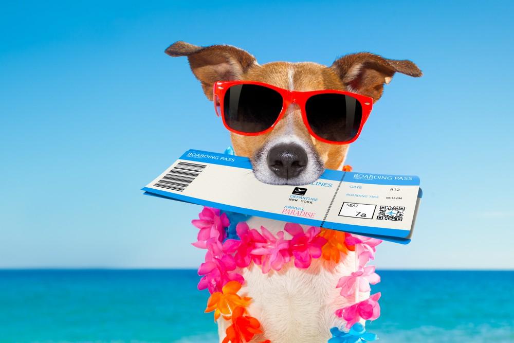 ¿Te ha pasado que quieres viajar con mascotas y no sabes por dónde empezar? ¡No te preocupes! Actualmente existen muchas facilidades que te permitirán salir de vacaciones con toda la familia, incluyendo a tu perro o gato.