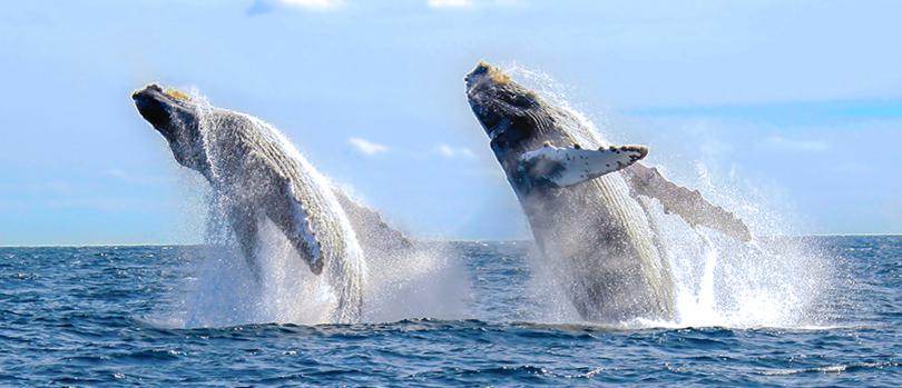 La fotografía: una de las principales actividades del ecoturismo