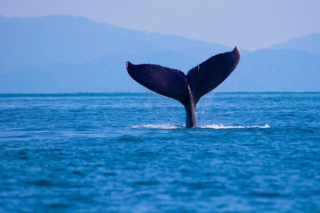 Actividades acuáticas en Loreto, Baja California Sur