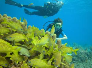 Deportes extremos en Cancún, Buceo en Cozumel
