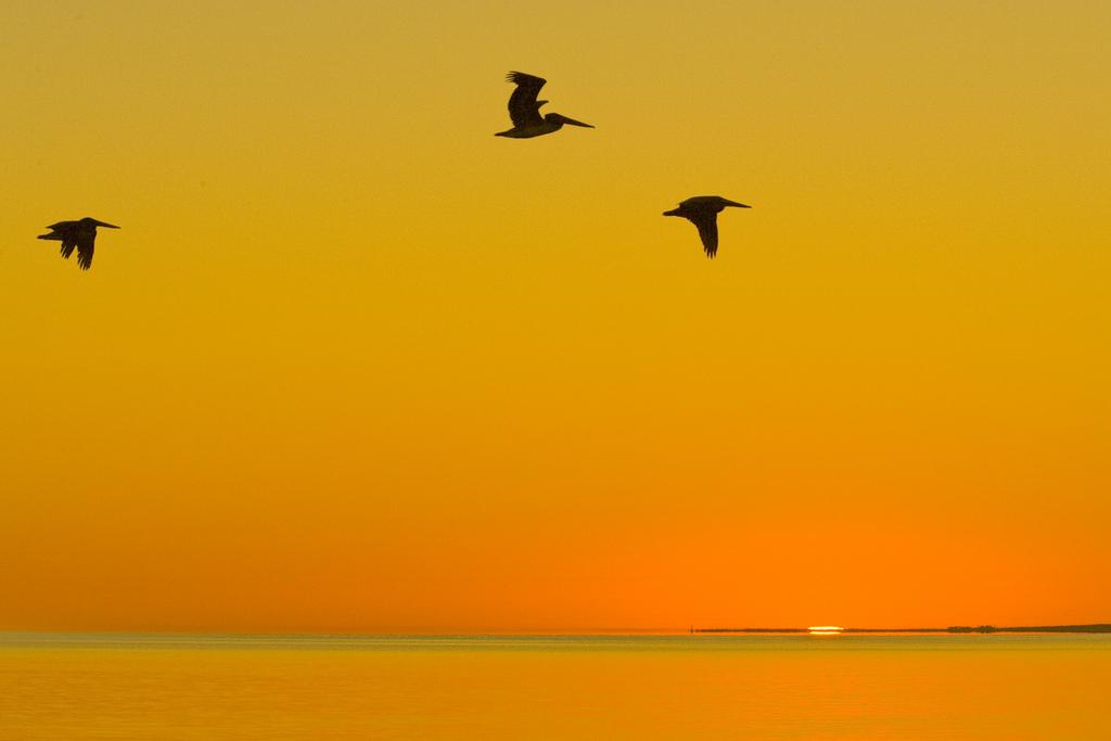 Foto de Charlie Stinchcomb en Flickr, licencia CC BY 2.0