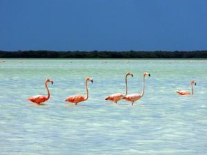 Disfruta en Yucatán de tus vacaciones en la playa