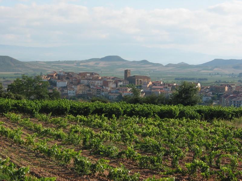 Vuelos baratos a Europa enoturismo en La Rioja