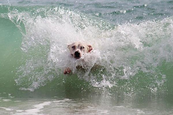 Agencias de viajes especiales para que vacaciones con la mascota