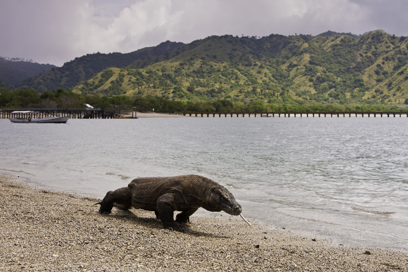 Un mundo de cruceros: la Isla de Komodo en Indonesia